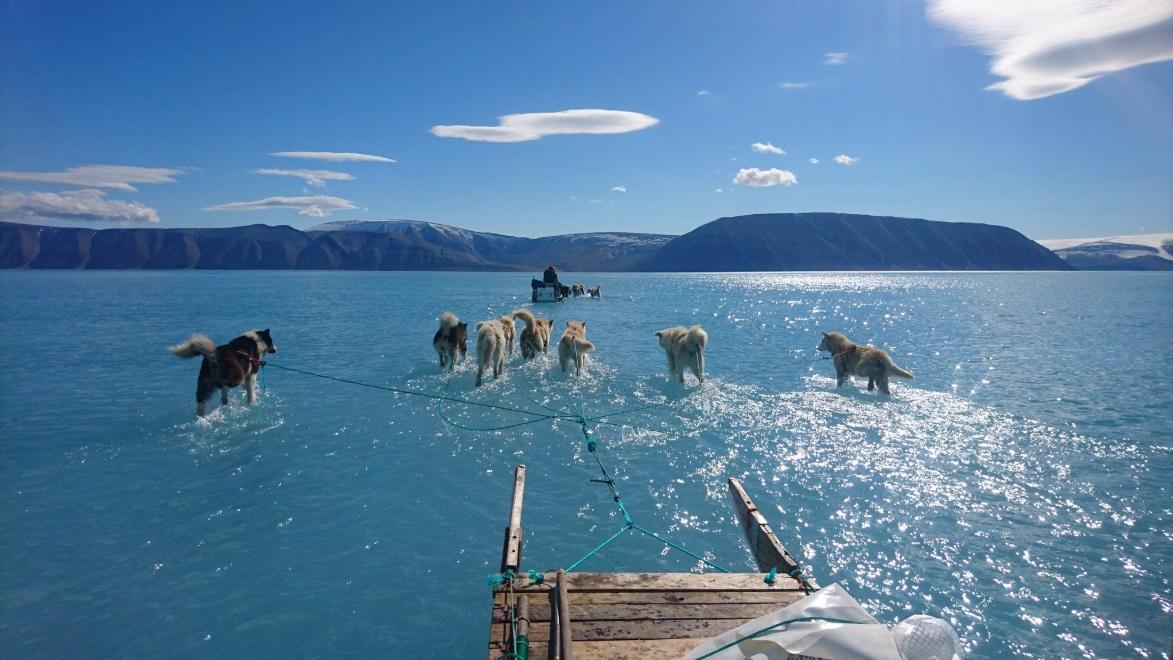 科學家在格陵蘭拍攝到冰層融化,導致雪橇狗行走在水面。網上圖片