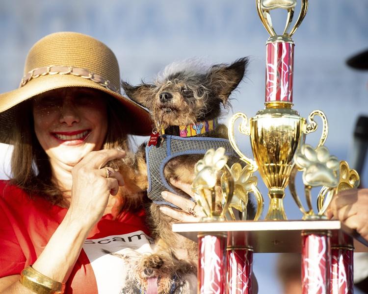 小狗Scamp荣登全球最丑狗狗宝座。