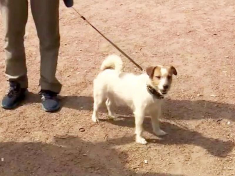 聰明的小狗Macho拯救了一名被遺棄初生女嬰。網圖