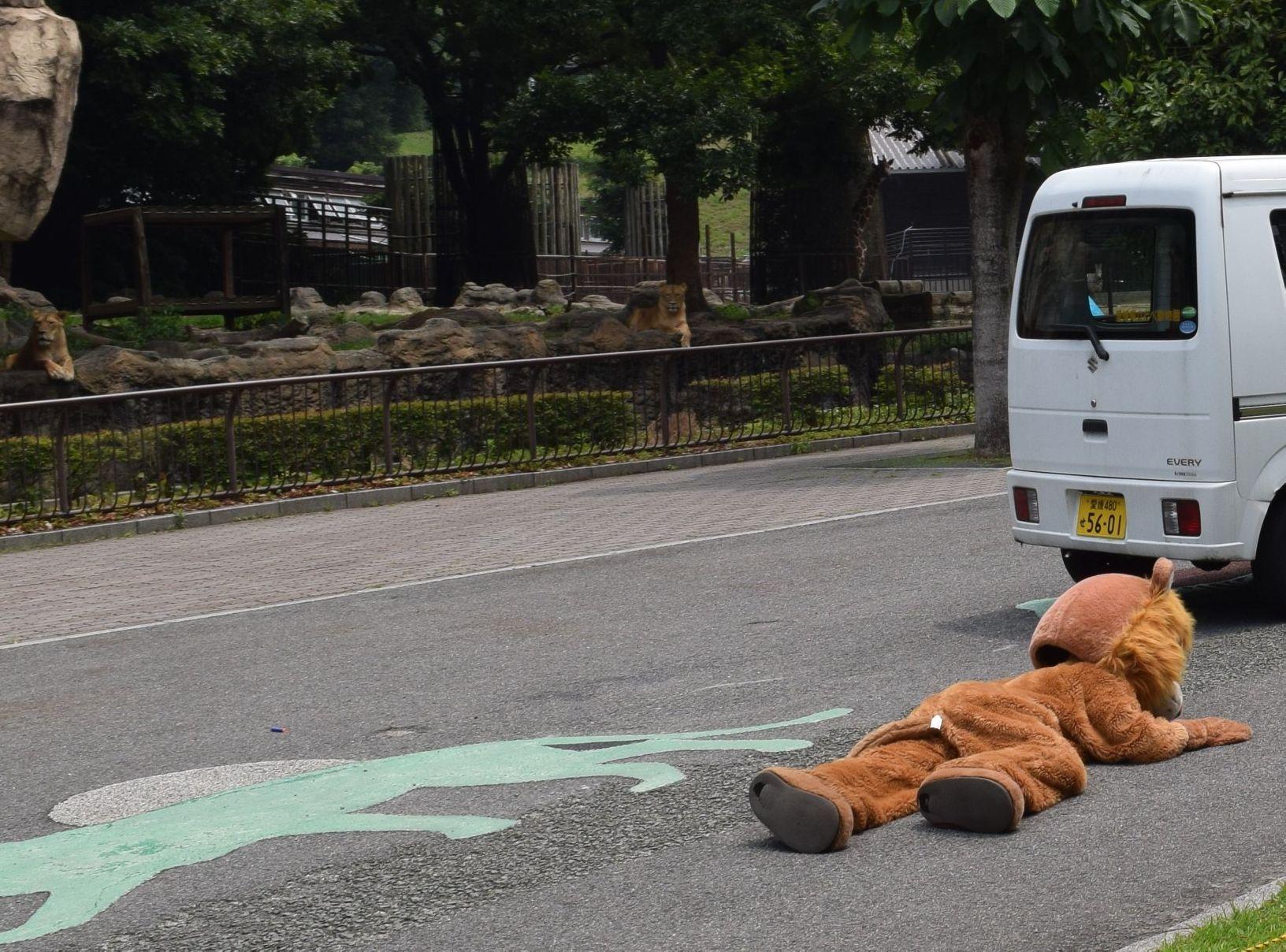 愛媛縣Tobe動物園近日進行「動物逃脫演習」。Twitter圖片