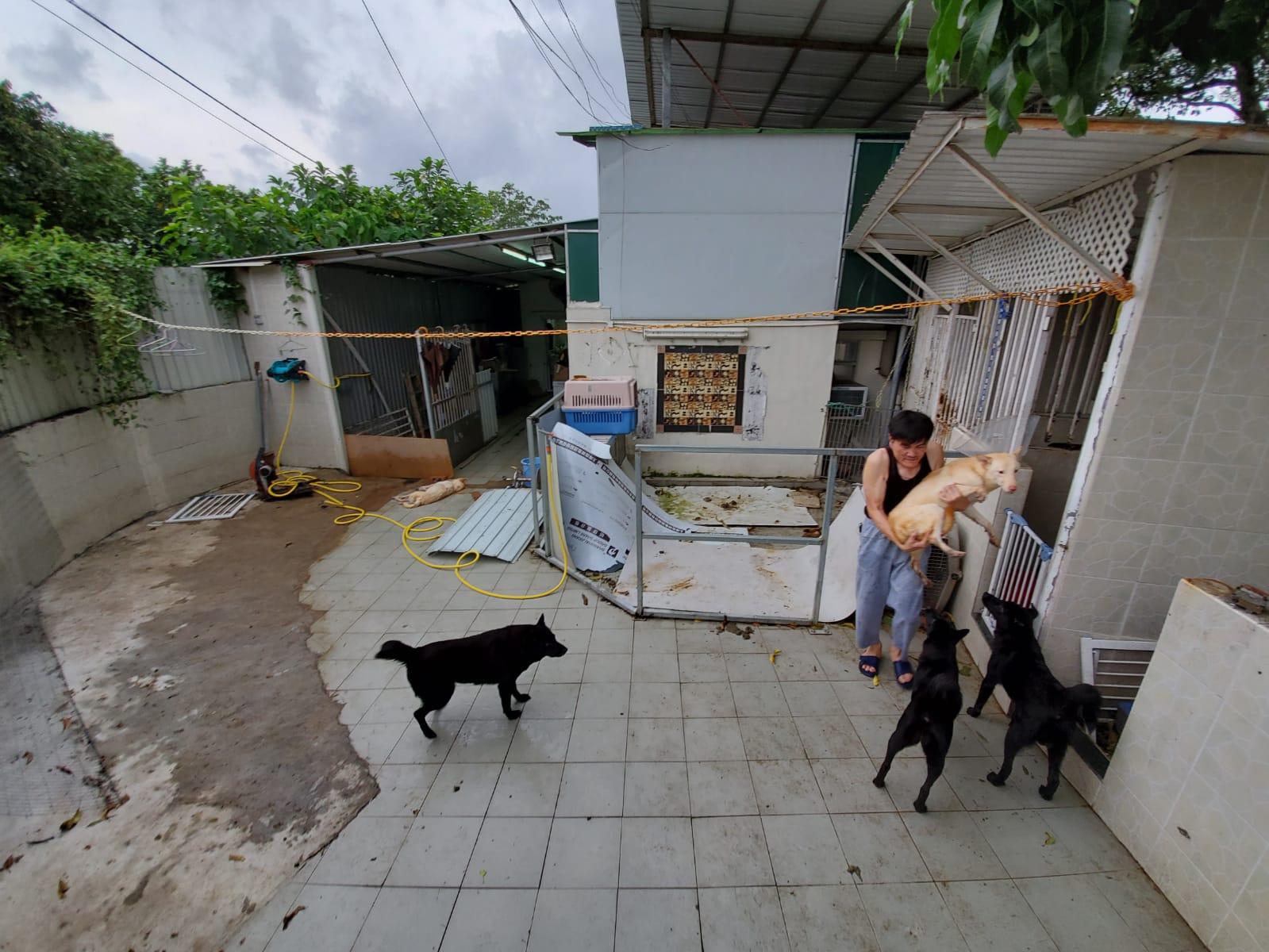 坪輋現虐狗狂徒,八狗疑遭落毒。