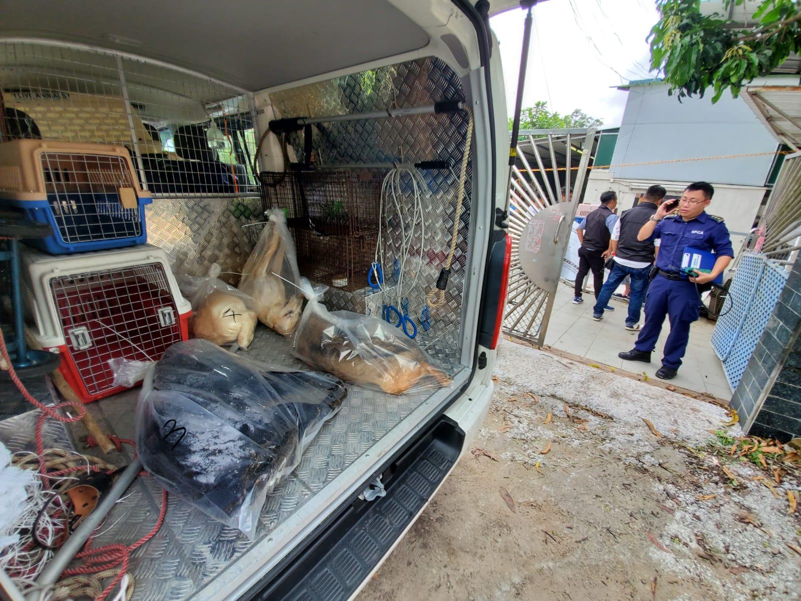 愛護動物協會職員到場檢走狗狗的屍體。 蔡楚輝攝