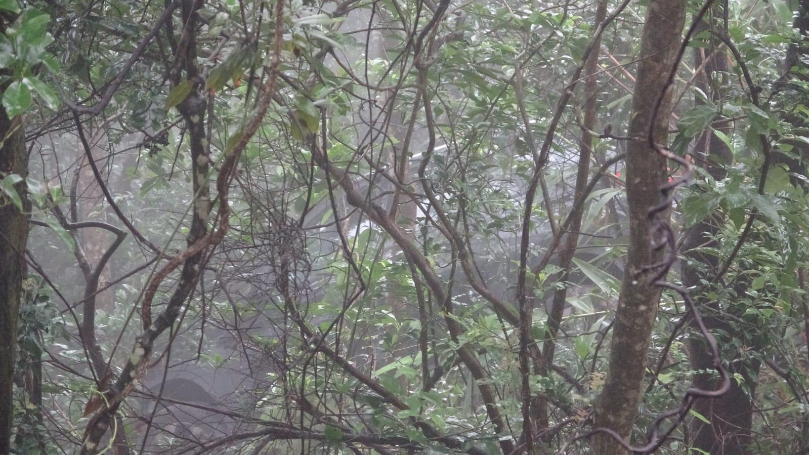 一輛私家車於山頂道衝落山坡。