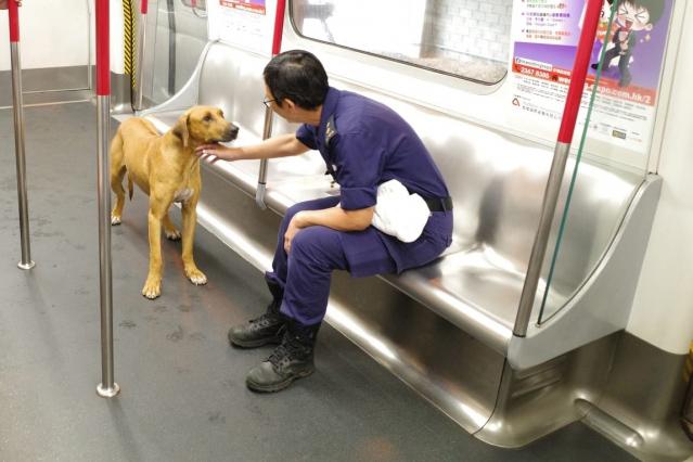 愛協督察接走狗隻。 愛協圖片