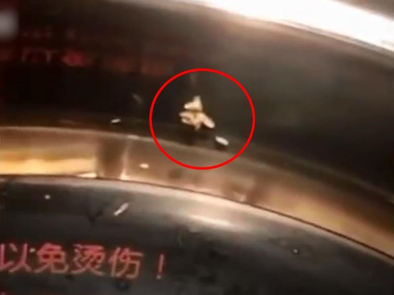 浙江一女士日前到一間火鍋店用餐時,竟看到有白色蛆蟲正在鍋子裡頭爬行。影片截圖