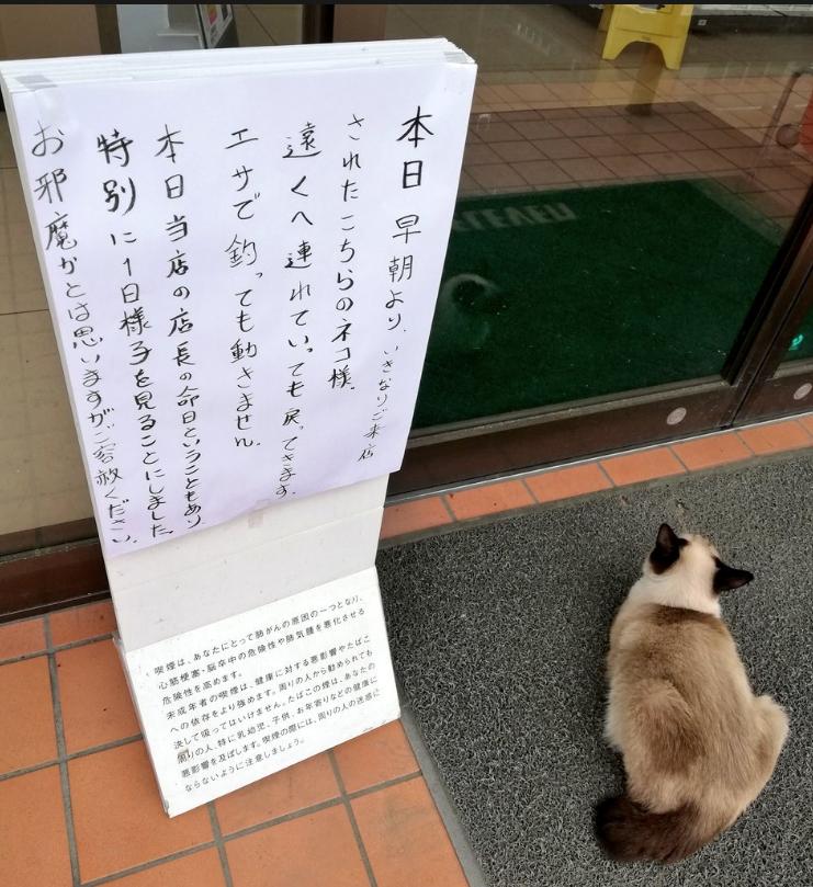 花猫坚持待在一家便利商店门口,连出动零食引诱都不愿走。 Twitter图片