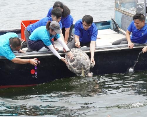 擱淺海龜治理一年康復放歸大海 海洋公園籲減塑護海洋