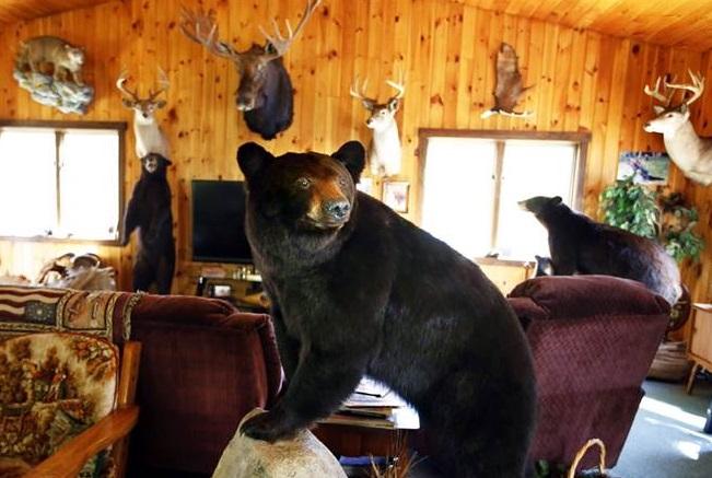美國科羅拉多州一隻野生黑熊闖進一間民居內覓食。 示意圖/AP