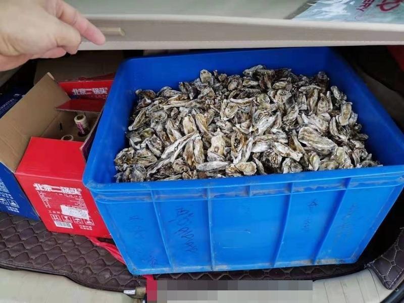 不少市民及遊客到場撿拾海鮮。網圖