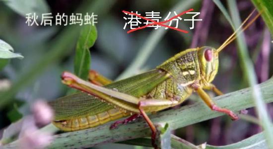 文章配上蝗蟲圖片,「港毒分子」4字被打交叉。人民前綫微信