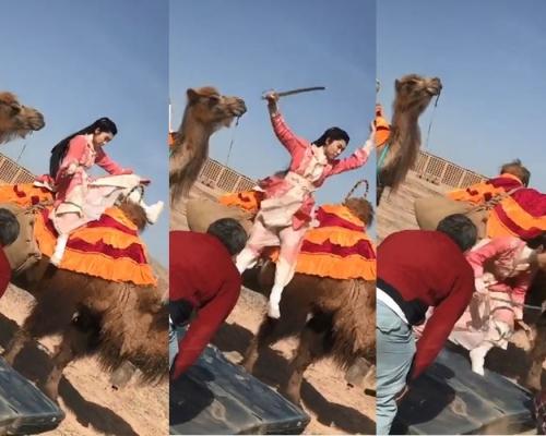 第一次騎駱駝嚇到大叫 胡定欣跳落地撻親拗柴
