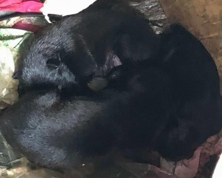 6隻狗BB奄奄一息。網圖