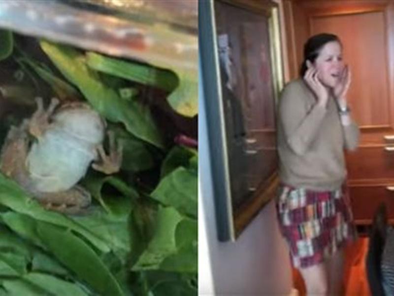 美婦買沙律送生猛青蛙一隻。網上圖片