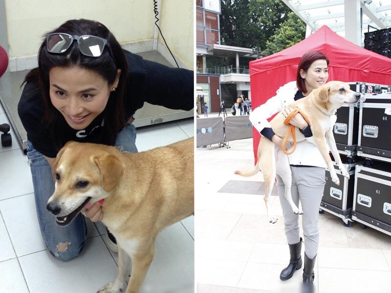 宣萱在微博透露自己其中一隻愛犬Moon不幸離世。 微博圖片