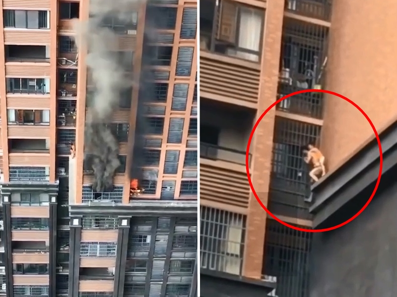 長沙一住戶發生火災,一名男子背著孩子順著防盜窗往下爬逃生。 影片截圖