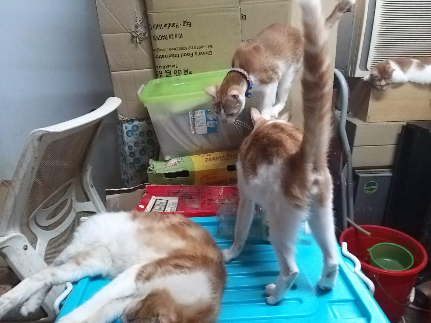 貓義工Alex提供