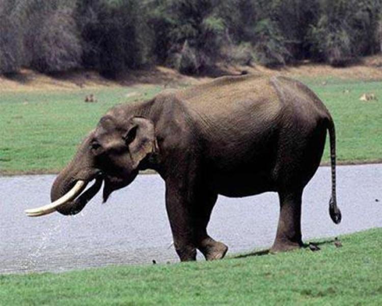 雲南數月來發生多宗野象襲擊居民事件。