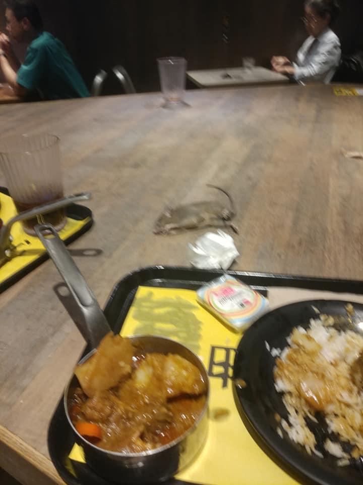 一隻約手掌大小的老鼠伏在餐桌上。網民盧恩培照片