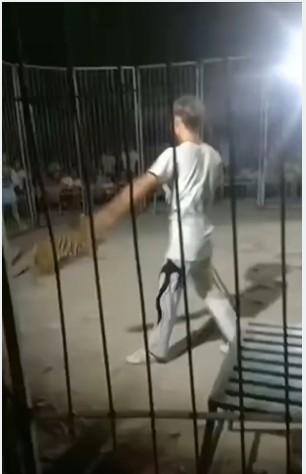 幼老虎在表演途中從籠中逃脫。網圖