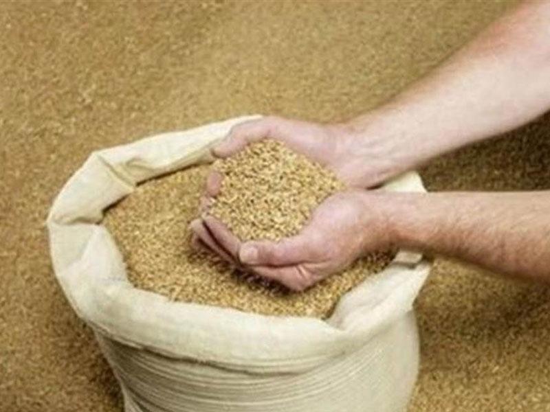 中國將首次從阿根廷進口飼料豆粕。(網圖)