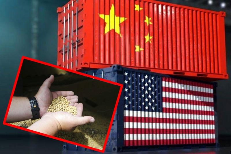 美證實中國採購超20萬噸大豆。AP