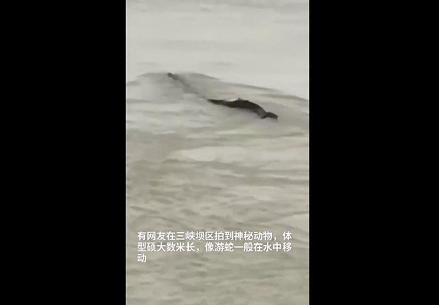 網民影到三峽壩區疑似出現水怪。網圖