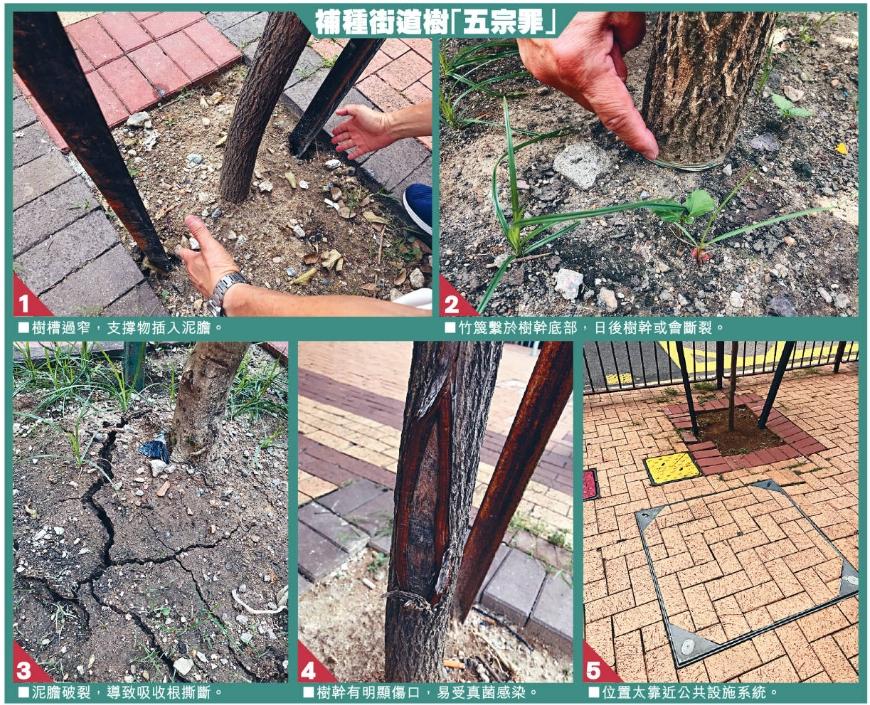 未吸取山竹教訓 「盲種樹」恐重遇巨災 樹苗質素欠佳泥土養分不足