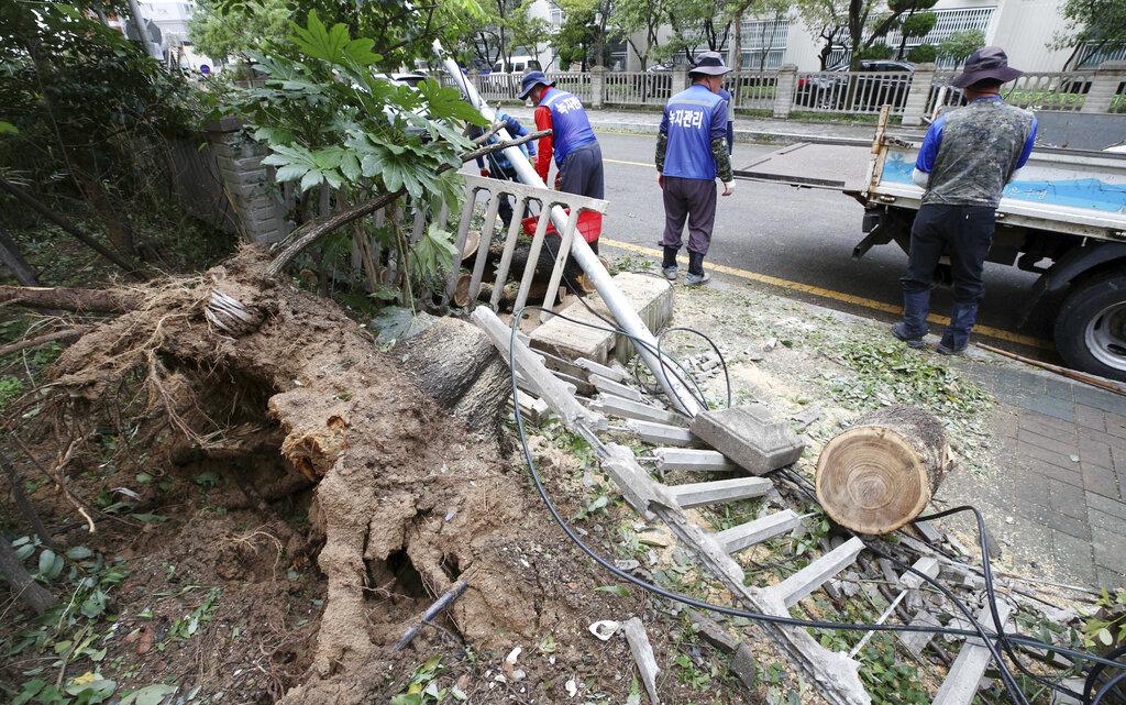 「塔巴」掠過南韓南部為南韓帶來狂風暴雨,樹木被吹翻。AP