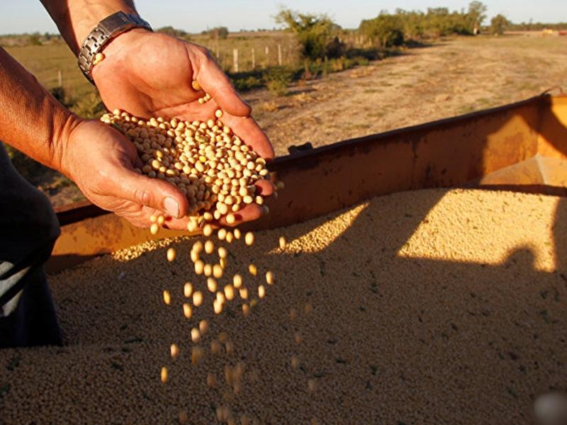 中國再次釋出善意,向美國購買60萬噸大豆。 示意圖