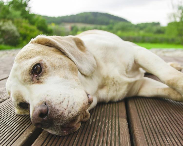 狗狗被虐後身心都會有嚴重影響。配圖與本文無關