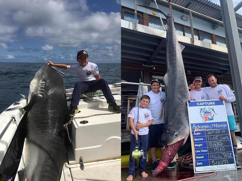 捕獲314公斤虎鯊,澳洲8歲男童刷新世界紀錄。網圖