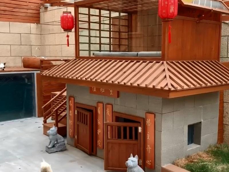 江蘇狗主人花過萬元為狗建豪華別墅,有泳池烘乾房。影片截圖
