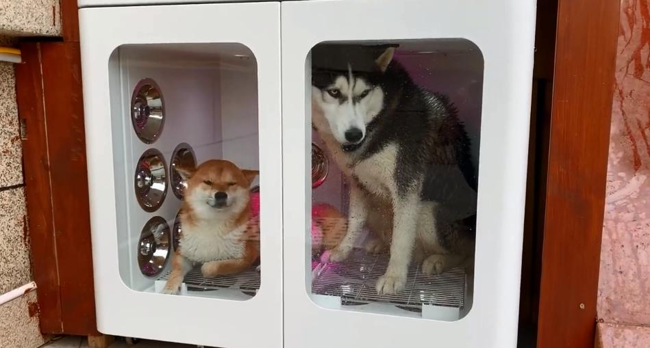 豪華狗別墅有烘乾房。影片截圖