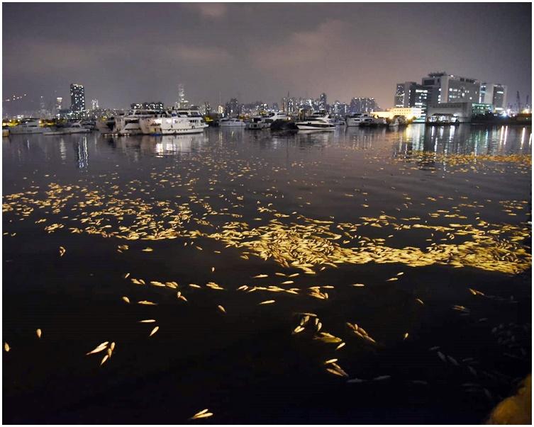 死魚沿碼頭一直延伸至貨物起卸區。
