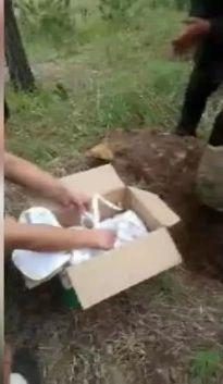 男嬰被人活埋荒坡地下被一個紙箱。網圖