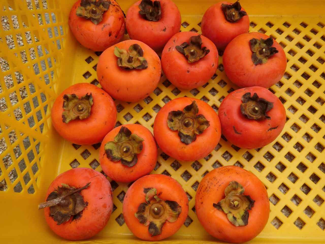 秋天是柿子盛產季節。資料圖片