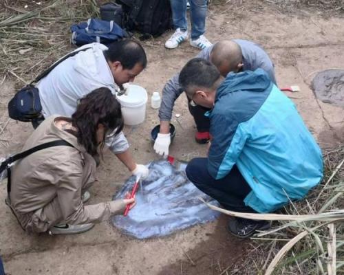 專家憑網紅影片發現侏羅紀晚期雷龍腳印化石