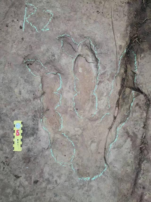 研究員等人前往百花鎮野雞坡現場考察,證實發現侏羅紀晚期恐龍腳印化石。(網圖)