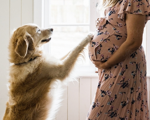 愛犬被奶奶棄掉  懷孕3個月孕婦盛怒下墮胎離婚