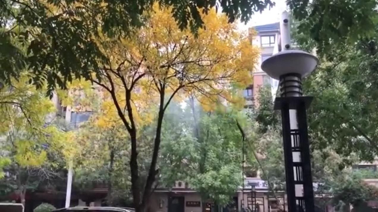 清潔工用水槍擊落樹葉。網上圖片