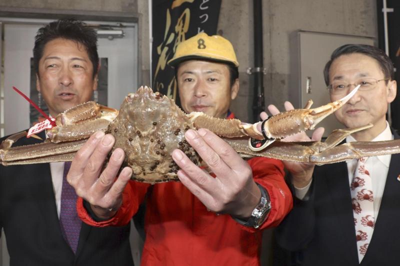 日本松葉蟹季登場,高級品牌蟹一隻500萬日圓拍出。(網圖)