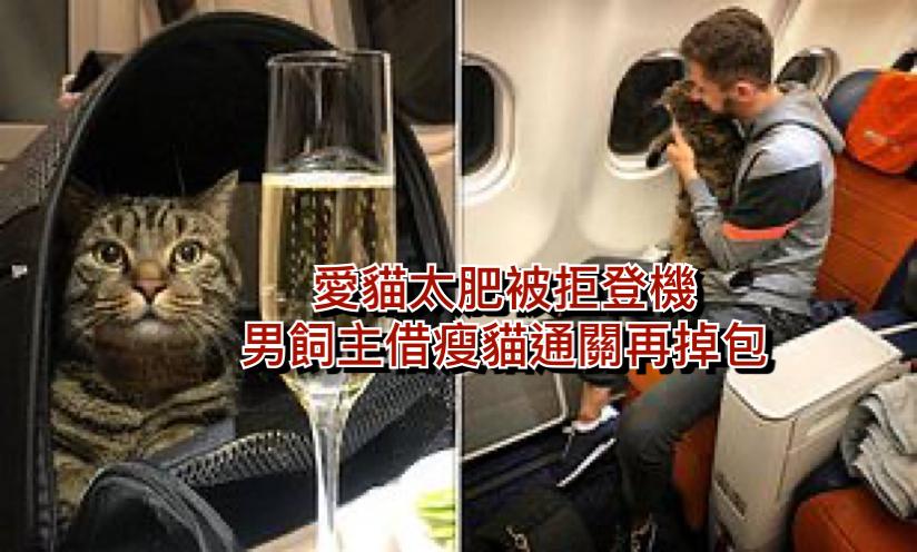 男飼主在網上自爆通關時用瘦貓換肥貓。