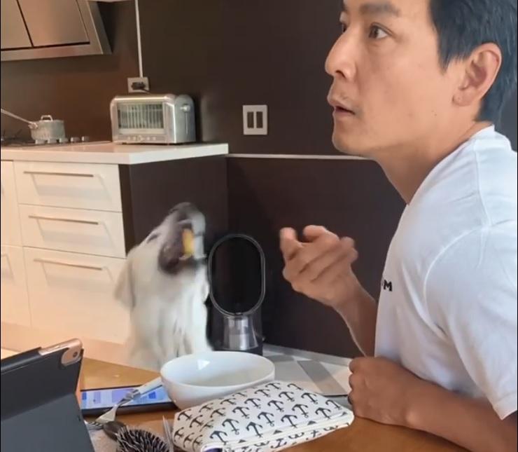 狗狗輕輕一跳就接住,留意吳彥祖個樣。