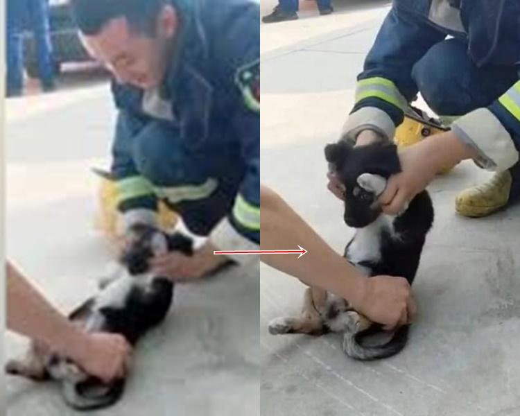 小狗被兩名消防員捉住四條腿強迫做sit up。