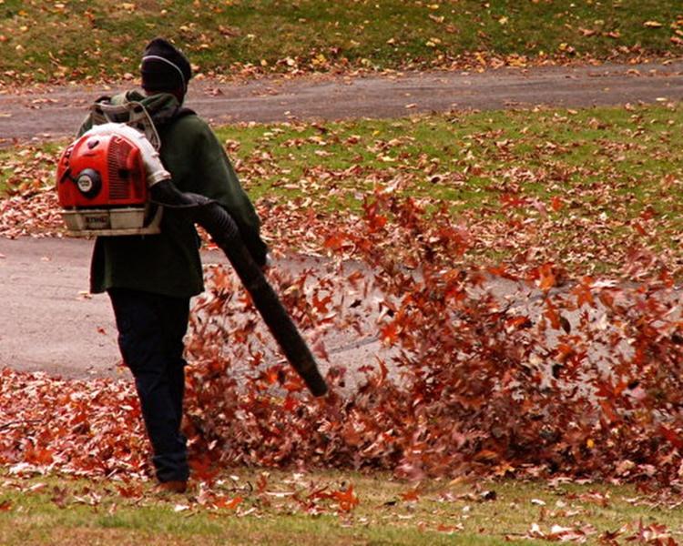 德國呼籲市民盡量不要使用落葉吹風機。網圖