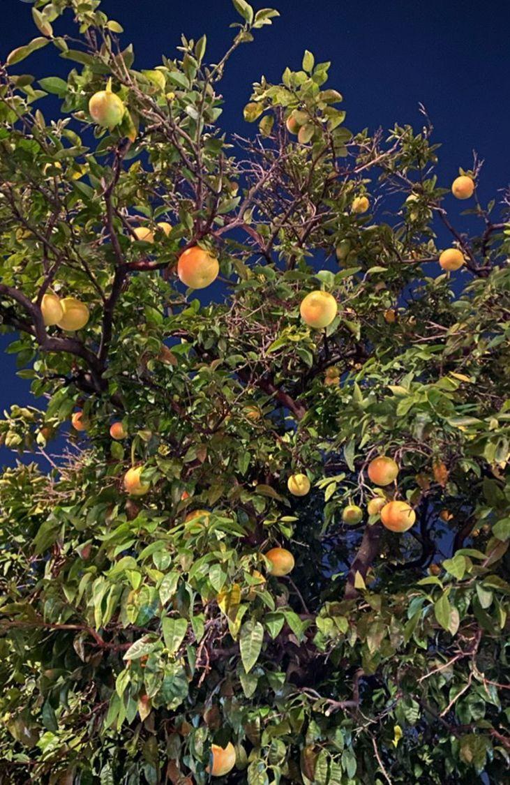 路邊果樹都係打卡位。