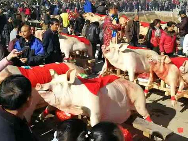 福建三明每年都會舉辦「晒豬節」。網圖