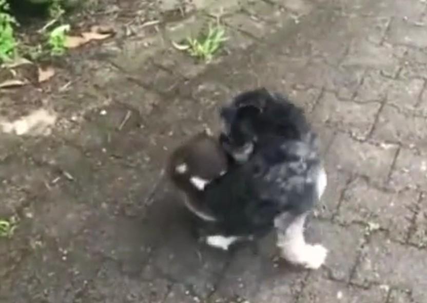 小树熊将狗狗误认作妈妈死抱住不放。网图