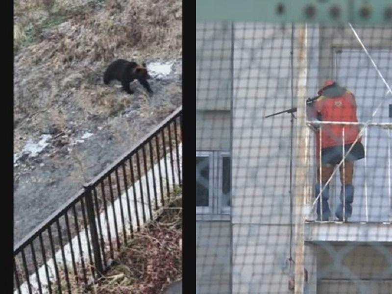 棕熊現身北海道帶廣車站附近,再跑進小學操場,遭獵人射殺。網圖