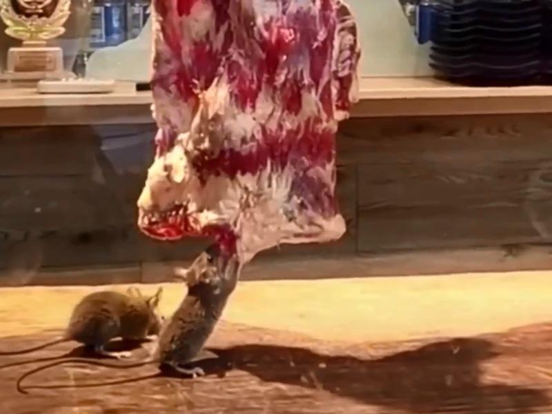 櫥窗中掛的牛肉被兩隻老鼠瘋狂啃食。影片截圖